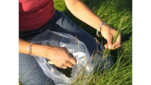 wild collecting native seeds